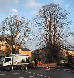 Ascending Arbs Tree Surgeon Services
